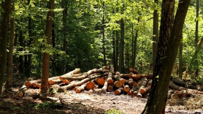 Екологи б'ють на сполох: треба негайно зупинити дерибан волинських лісів