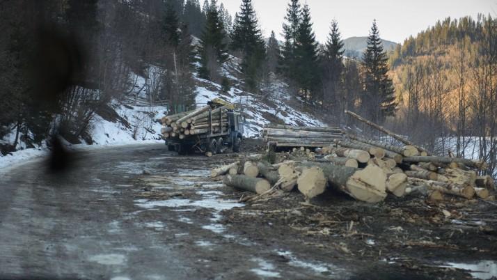 Скасування мораторію на експорт лісу-кругляка є злочинним наміром і аферою влади, — Наливайченко