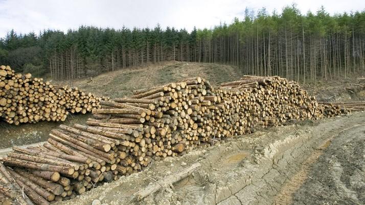 Наливайченко: незаконна і злочинна вирубка лісів — питання національної безпеки України