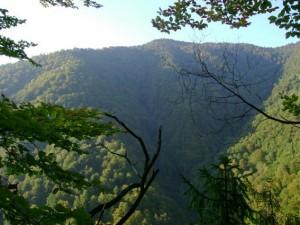forest_in_carpatian_biosphere_reserve